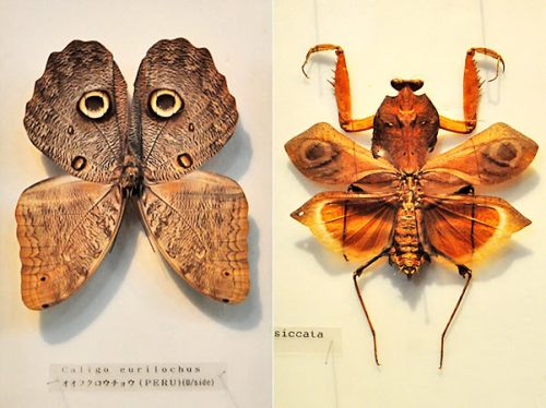 Insect-Kingdom-3