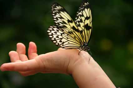 butterfly-child-hand