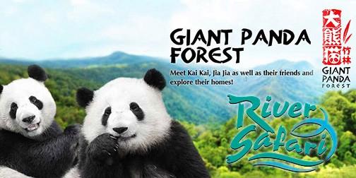 panda-mandarin-singapore