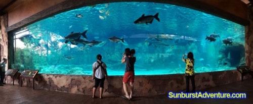 river-safari-aquarium