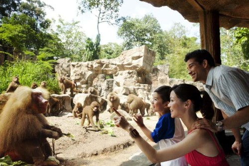 kebun binatang singapura, Singapore Zoo