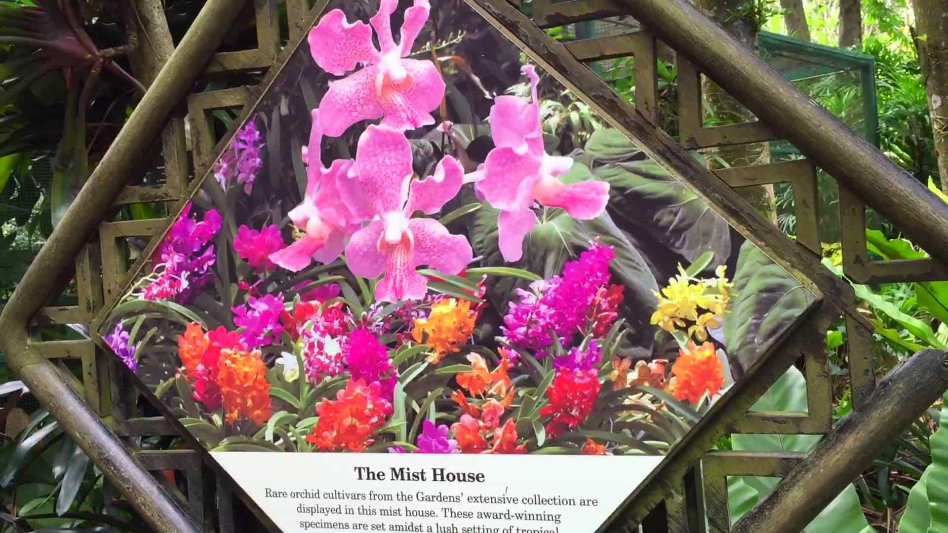 Taman Anggrek Di Singapore The National Orchid Garden By Bay Dewasa Tiket
